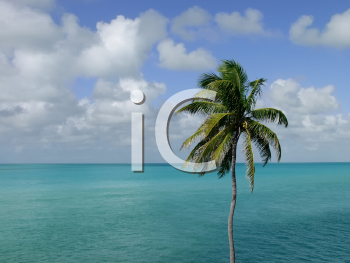 Royalty Free Photo of a Coconut Palm Tree in the Florida Keys Overlooking the Ocean