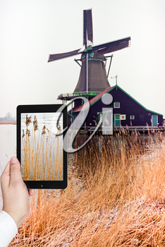 travel concept - tourist taking photo of frozen grass near Dutch windmill on mobile gadget, The Netherlands