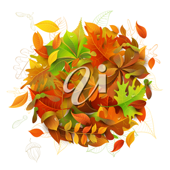 Colourful autumn maple, oak, birch, elm, rowan, chestnut, aspen leaves and acorns on white background.