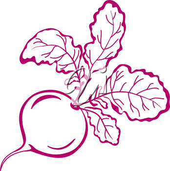 Vegetable, red radish with leaves, vector, symbolical monochrome pictogram