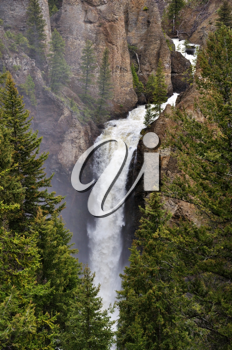 Royalty Free Photo of the Tower Fall In The Yellowstone National Park,USA