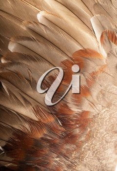 background of feathers
